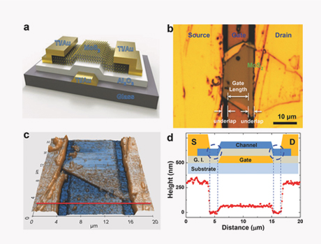 Local-gate multilayer MoS2 phototransistor